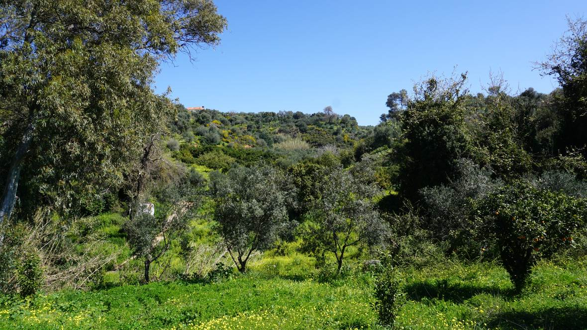 Plot for sale near Platanias by Chania Real Estate