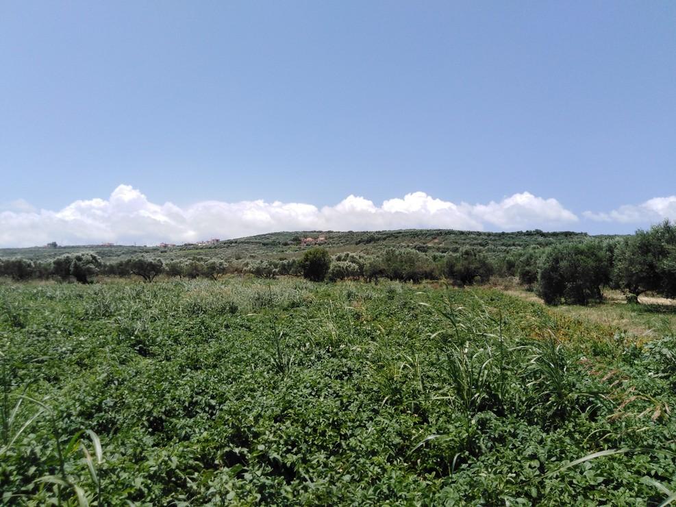 Kamisiana Plot for sale near Platanias