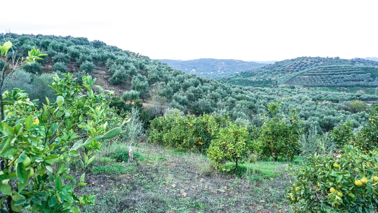 Fournas plot for sale near Platanias, Chania.