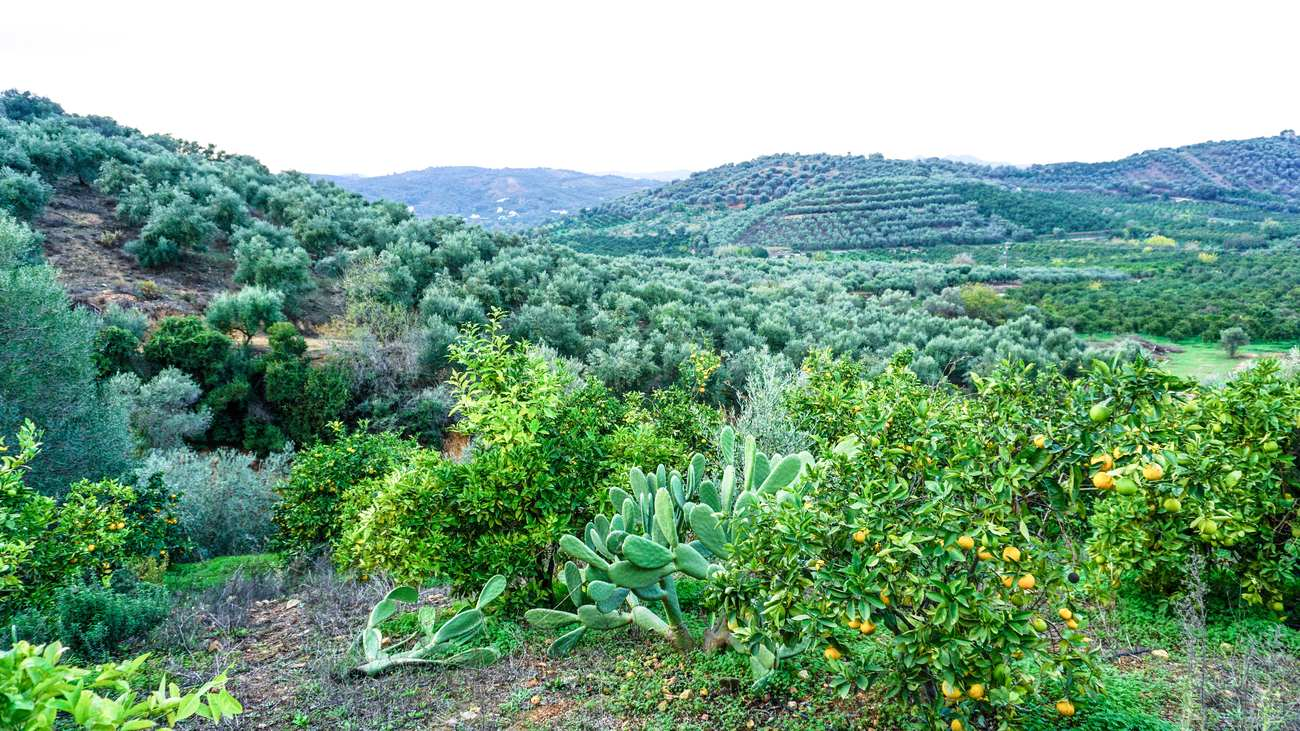 Fournas plot for sale for property buyesr looking for a property near Chania.