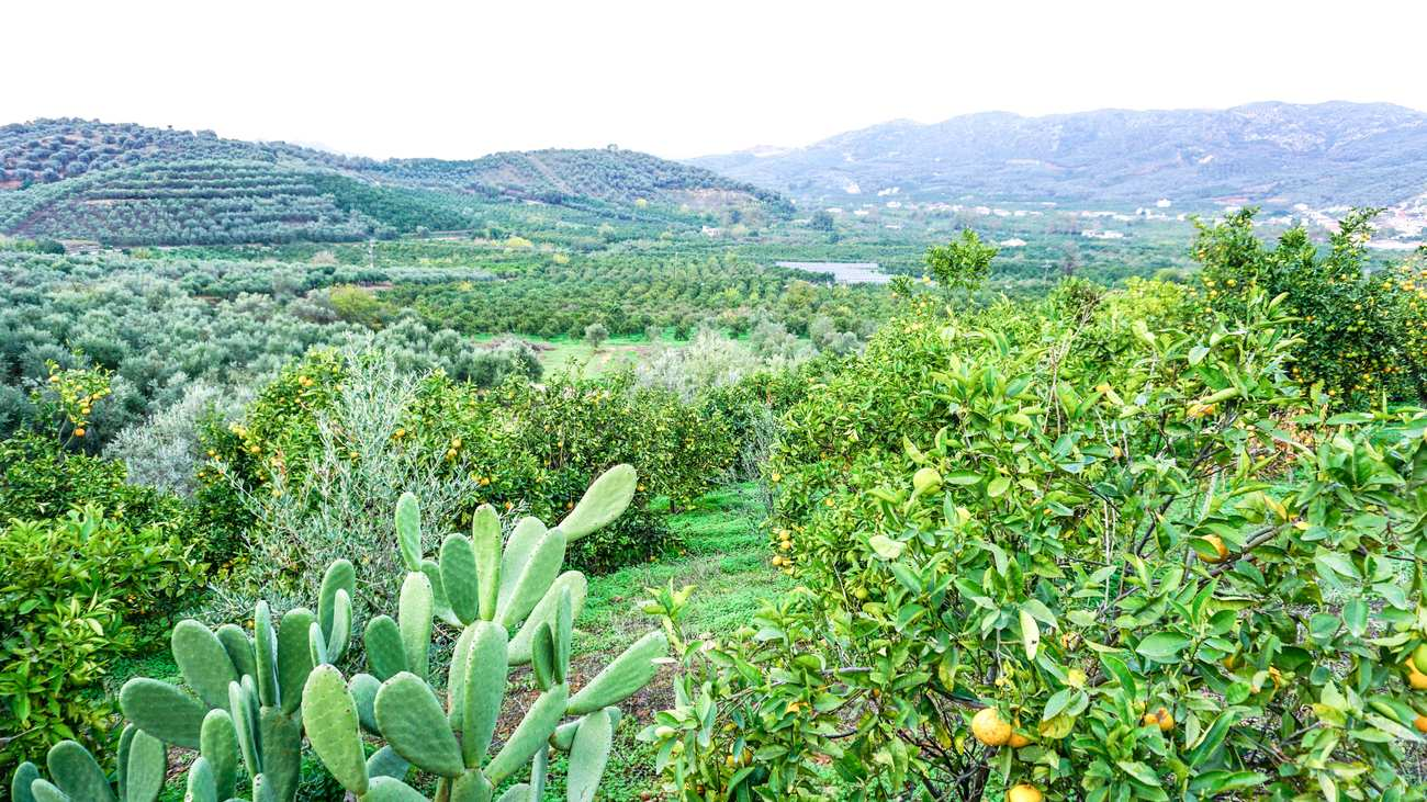 A lovely and cheap Fournas plot for sale, near Chania.