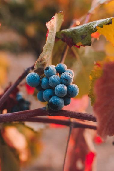 Pnevmatikakis Winery