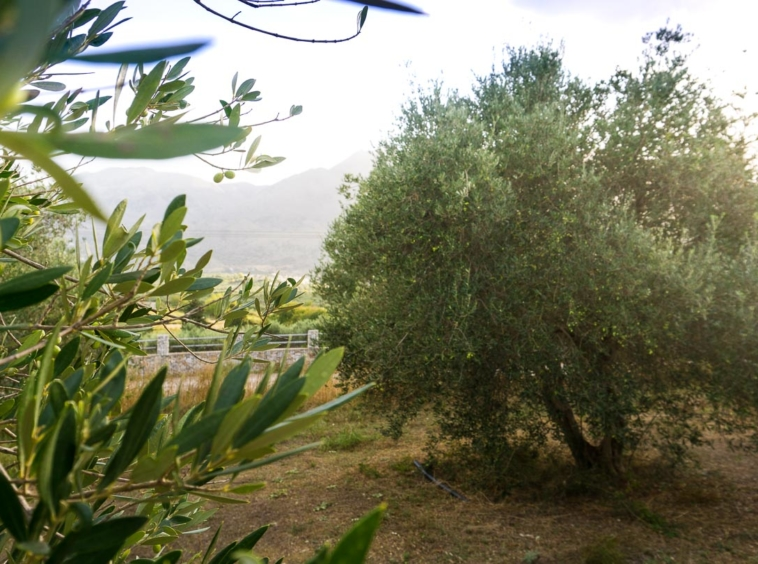 Panoramic views of the Kavros plot for sale