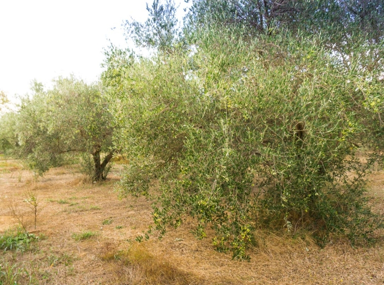 Kavros plot for sale at a good price