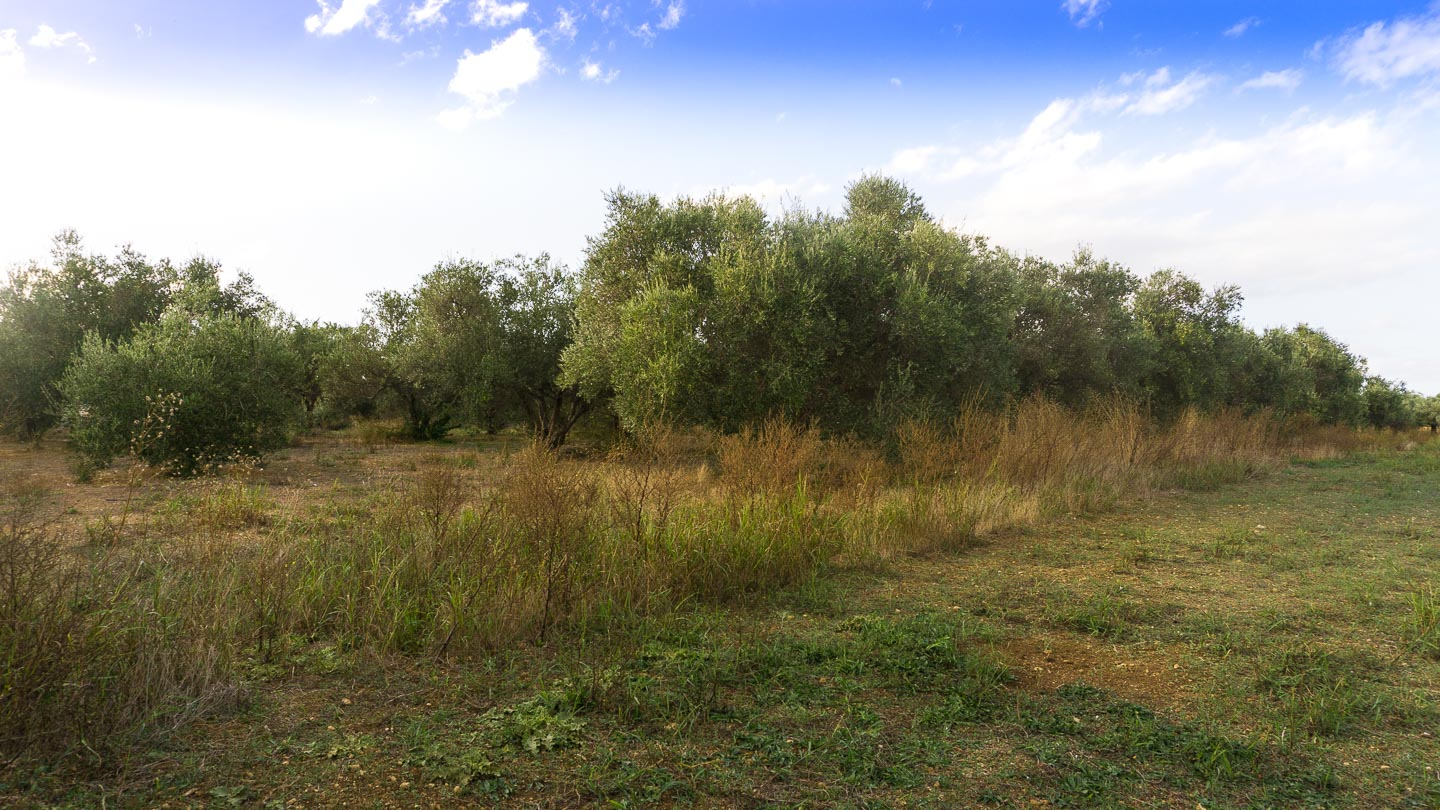 Land property for sale in Georgioupolis