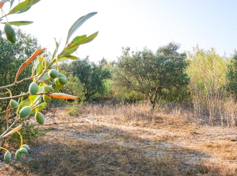 A Prime Located Plot Near Platanias (Pirgos Psilonerou) West Orientation